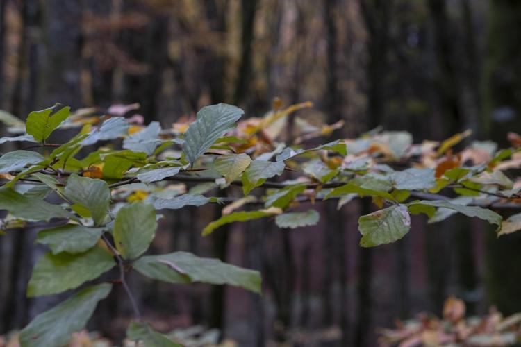 1_Foliage-2018-13-di-36