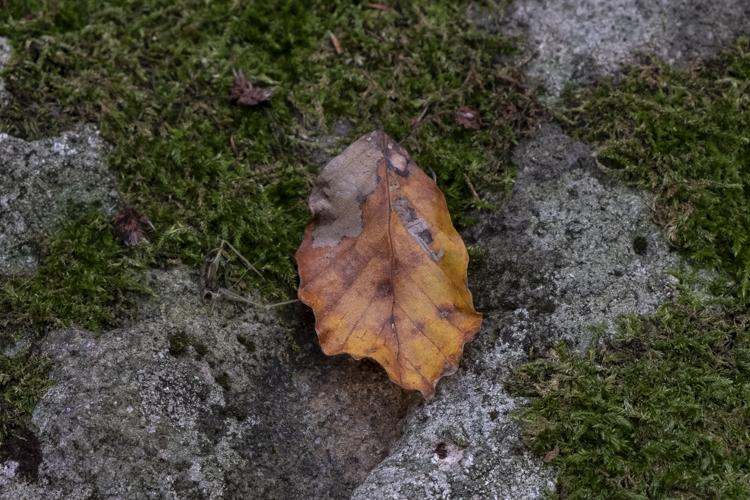 1_Foliage-2018-26-di-36